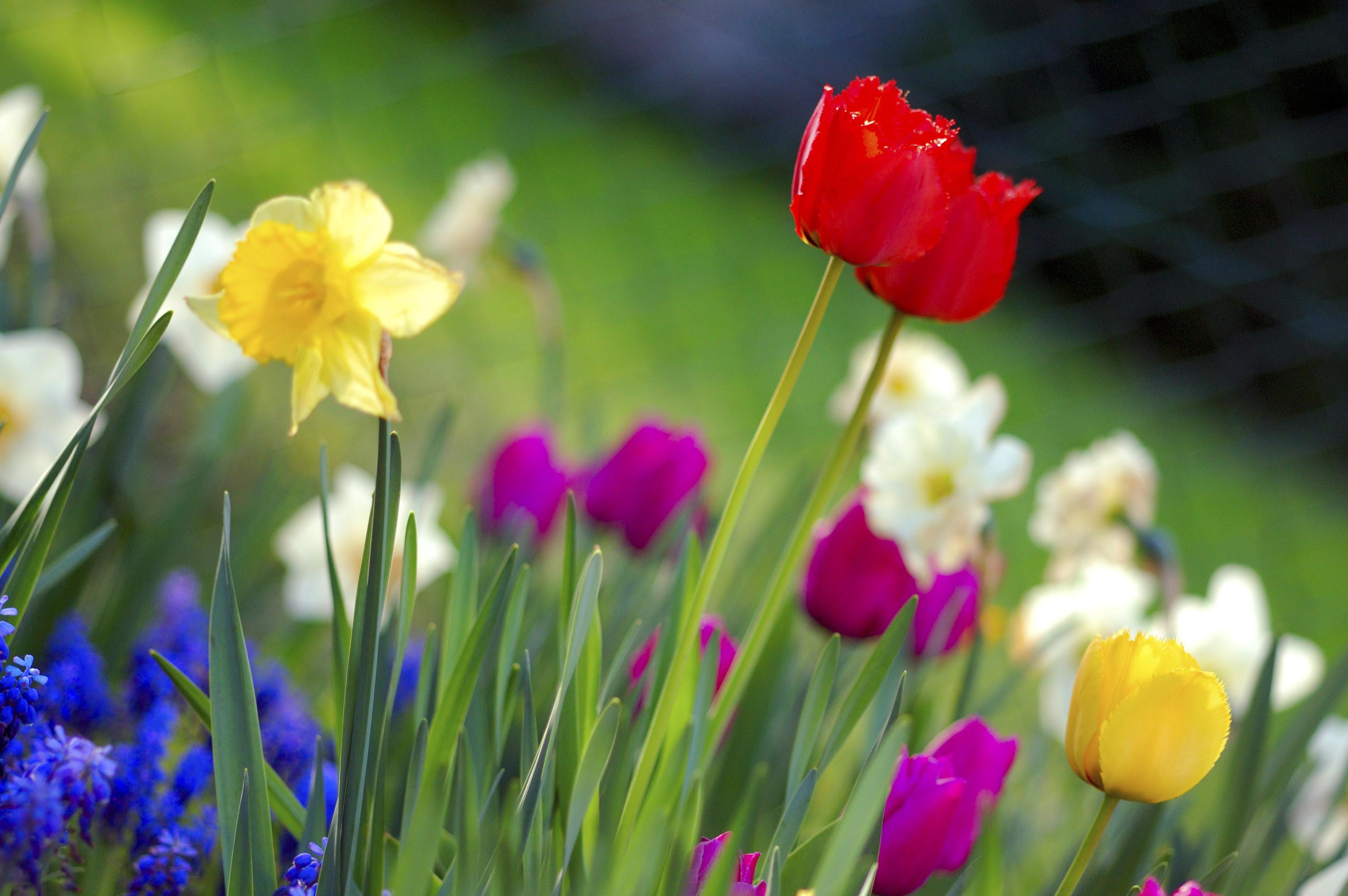 Spring ...