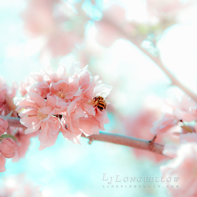 Pink Bee 32/365