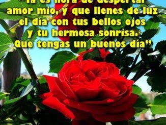 Descargar Imagenes De Buenos Dias Mi Amor Rosas De Amor