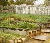 gardens planted by the Pilgrims in raised beds