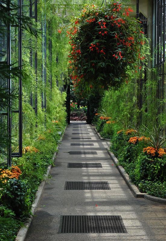 Conservatory - Acacia Passage