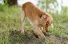 6 problemas de conducta en perros