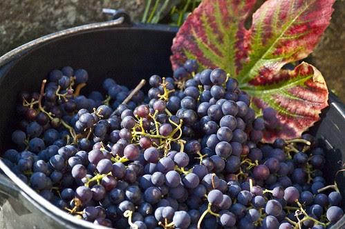 viinamarjad 2009 I