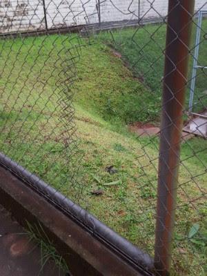 Segundo a PM, presos fizeram buraco em cela e cortaram alambrado de cerca (Foto: PM / Divulgação)