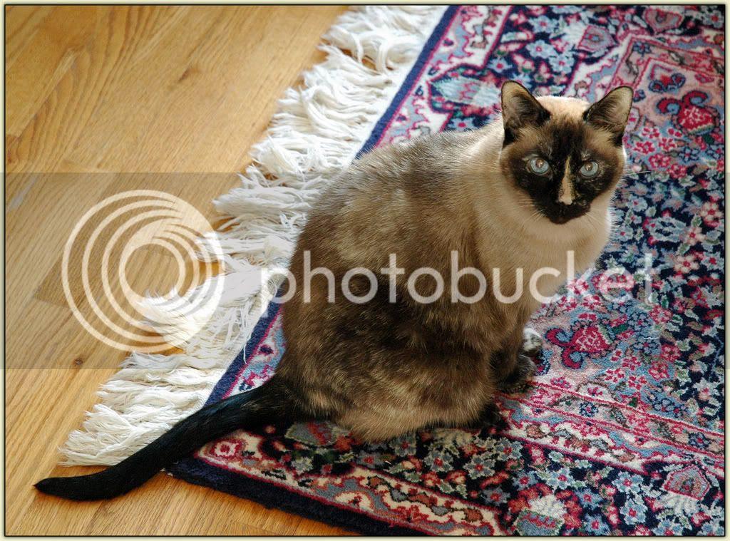 Carpet 'Kuna