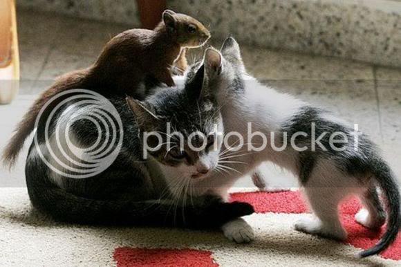 unusual friendship between cat and squirrel