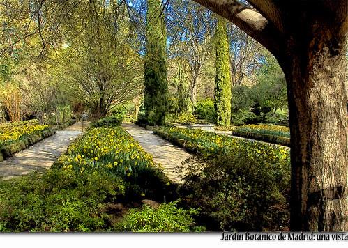 Jardín Botánico de Madrid: una vista