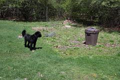 preparing mom and dad's garden 205