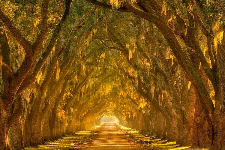 callejon de robles oak alley mississippi