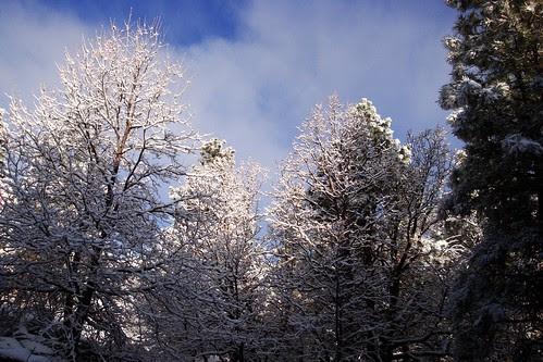 1st snow 10Nov08 02