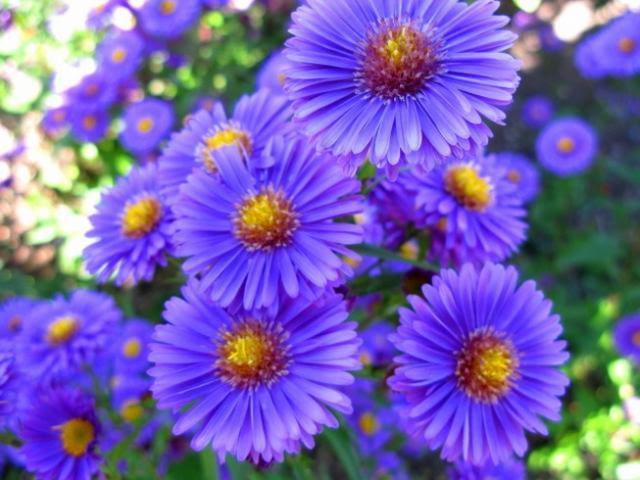 birth month flowers - monruadee rung