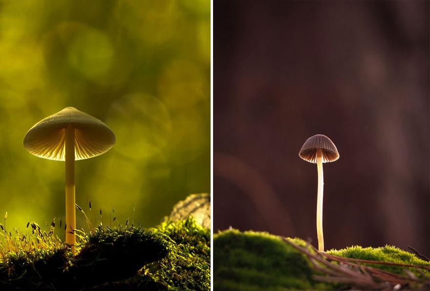 mushroom-photography-vyacheslav-mishchenko-16