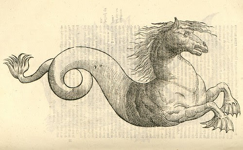 16th century woodcut of monster by Aldronvandi