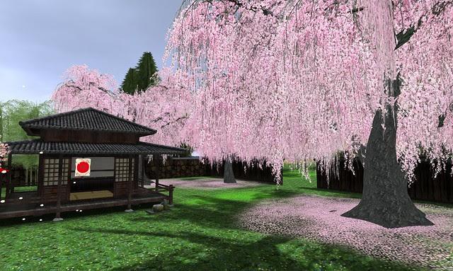 Cherry Blossom - 01