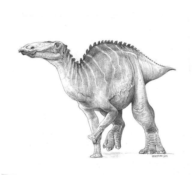 Edmontosaurus (or Anatotitan) copei
