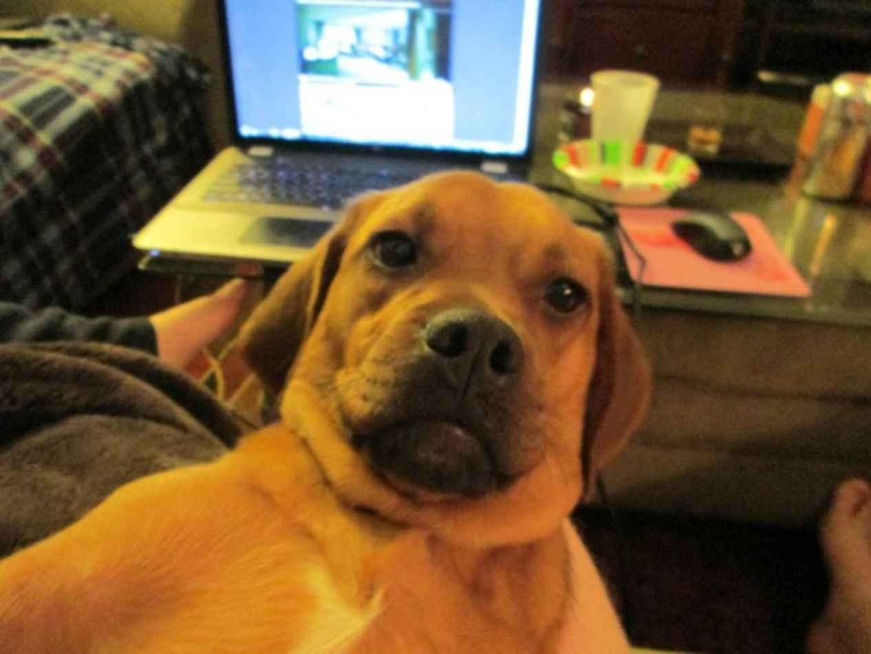 Las mejores fotos de perros tomándose una selfie