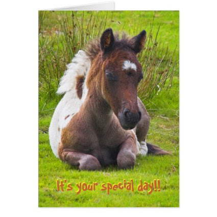 Kneeling Dartmoor Pony Foal birthday card