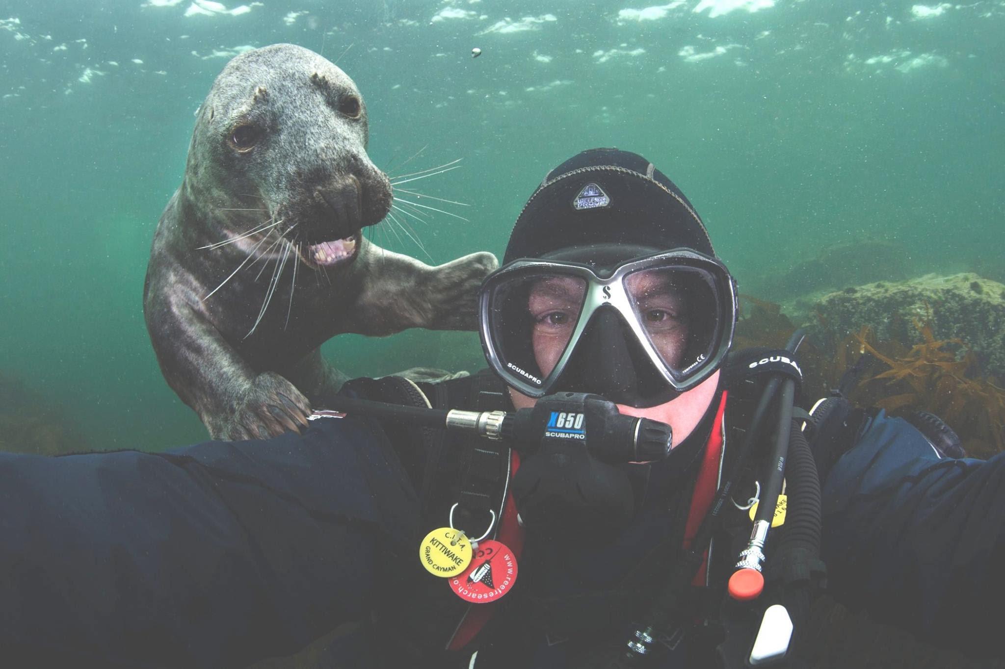 seal selfie