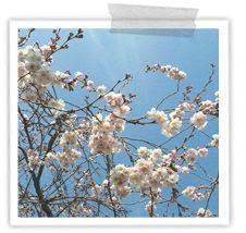 http://i402.photobucket.com/albums/pp103/Sushiina/cityglam/instasun2_zps9c1df2bc.jpg