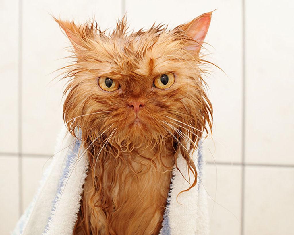 Fotografias engraçadas de gatos tomando banho 13