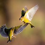 Photos. Saint-Avold : les oiseaux, fleurs, papillons et reptiles menacés
