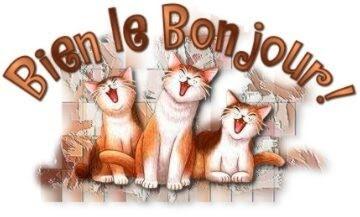 Bien le bonjour   (chats)