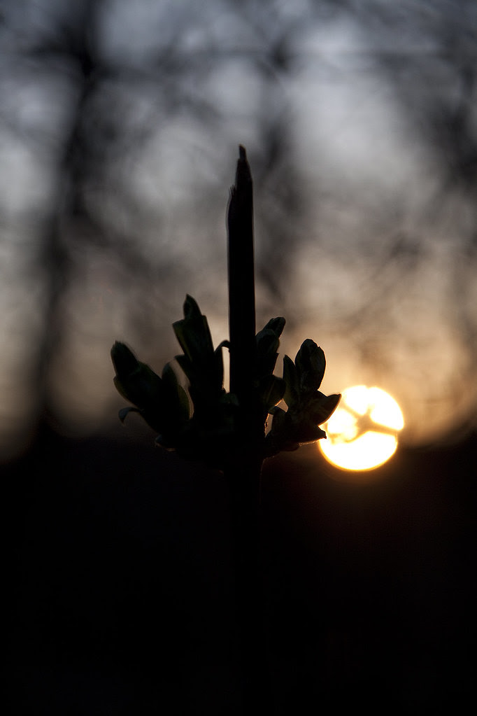 sunset behind new growth