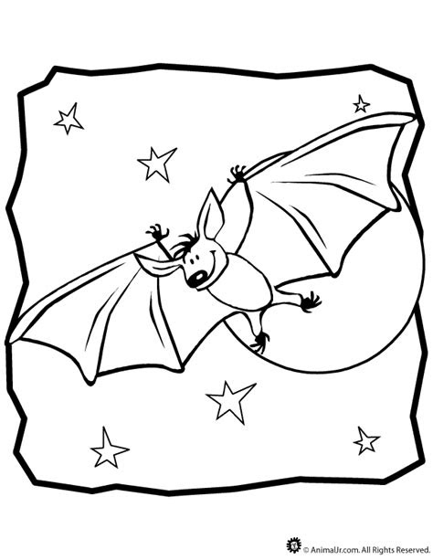 nocturnal animals coloring pages coloring home