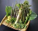 【天然 山菜】山菜天ぷらセット 会津地方産 山菜 春の味覚 朝取り採れたて新鮮な山の幸を産地直送