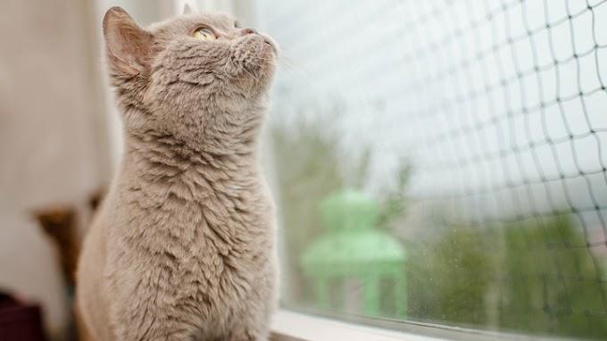 ¿Qué son los catios para gatos?