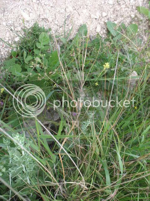 Tel Shiloh Butterfly--Look Carefully