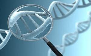 manipulación_genética