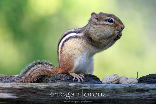 Oops!  Did I just say that in my outside voice?!! by Megan Lorenz