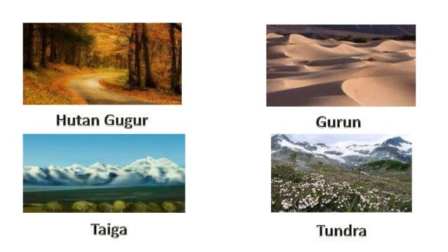 Contoh Gambar Ekosistem Buatan Aerotoh
