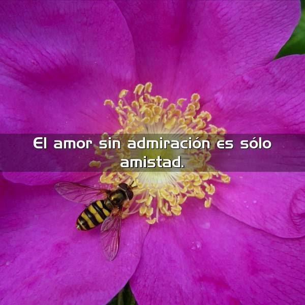 El Amor Sin Admiracion Es Solo Frases Con Imagenes