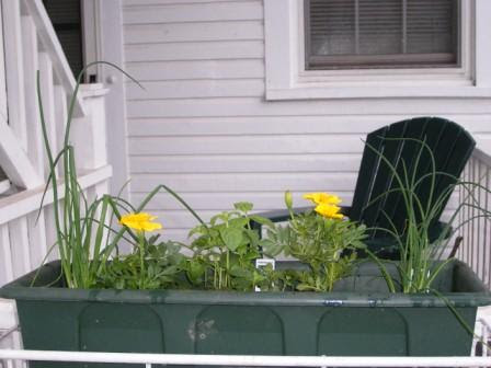 Chives, Marigolds, and Pepperming