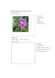 Tren 30 Morfologi Bunga Kertas
