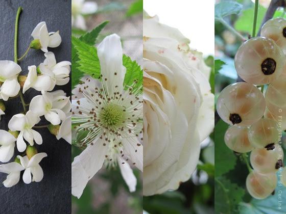 White - In my Garden