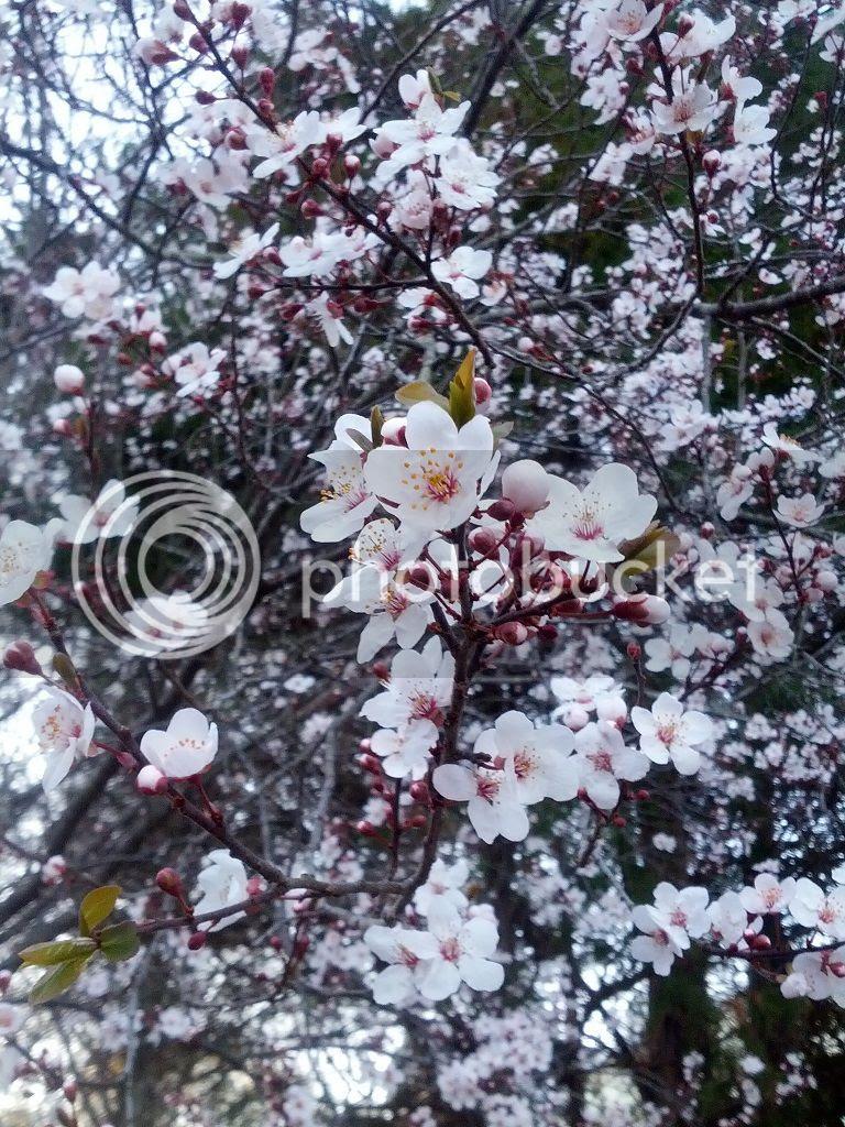 photo Spring21_zps581fa2a8.jpg