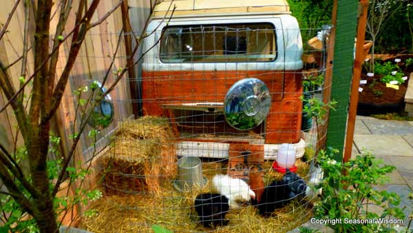 a-mobile-chicken-coop-that-travels-wherever-your-VW-bus-drives