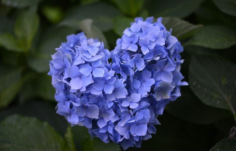 初夏の訪れを感じよう6月季節の花鑑賞 女子旅温泉メディア た