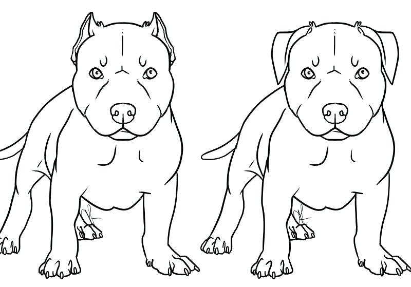 Realistic Pitbull Coloring Pages At Getdrawingscom Free For