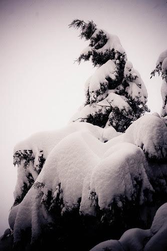 Storia di neve 06