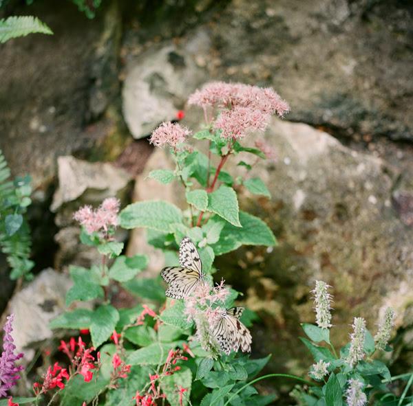 2011_1015_UFButterflies03.jpg