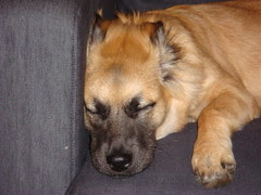 Snick Sleeping