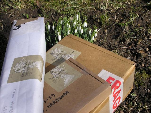 Galanthus packs