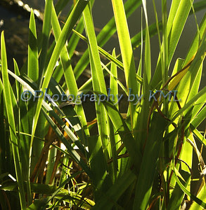 backlit glowing green grasses