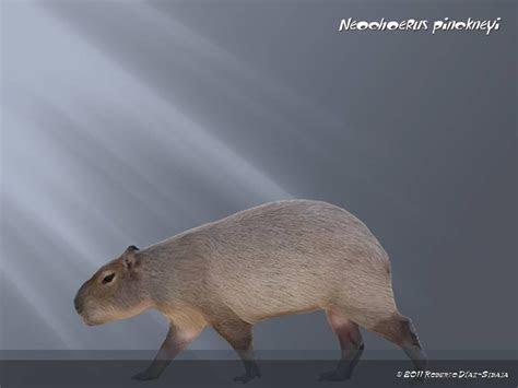 Neochoerus pinckneyi