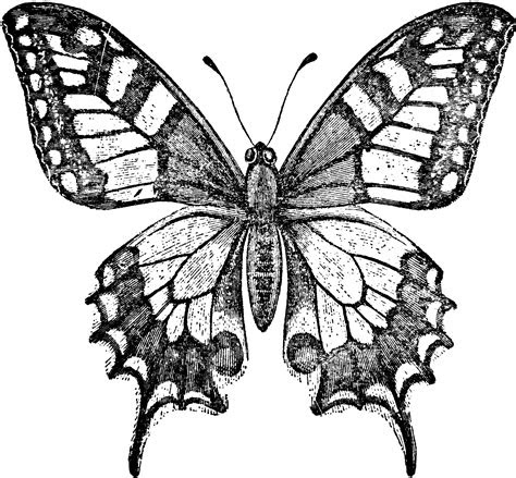 world swallowtail butterfly clipart