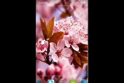 Wallpaper Gambar Bunga Sakura Animasi